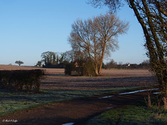 Spinney (mark.griffin52) Tags: olympusem5 england buckinghamshire cheddington copse spinney farm track village trees countryside landscape
