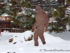 February 7, 2020 - Sasquatch in the fresh snow. (ThorntonWeather.com)
