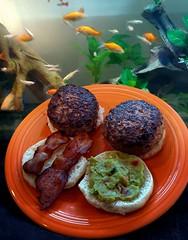 Burger Time!!!! (Vinny Gragg) Tags: food delicious burger burgers bacon guacamole animal animals fish fishtank fishtanks aquarium joliet illinois jolietillinois willcounty hamburger hamburgers guppy guppies minnow minnows goldfish plate