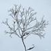 Winter Floral - Flore d'hiver
