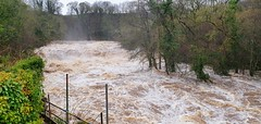 Aysgarth Falls - The Yorkshire Dales - 2020-02-08 (BillyGoat75) Tags: aysgarthfalls aysgarth storm stormciara flooding water fastflow trees theyorkshiredales thedales northyorkshire waterfall