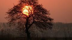 Zonsopkomst Binnenveld (jandewit2) Tags: zonsopkomst sunset binnenveld natuur nature nederland netherlands nikon natuurmonumenten trees d7100