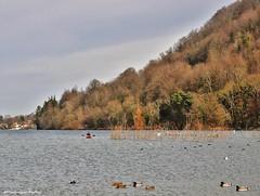 Lac de Paladru (Dominique Dufour) Tags: lacdepaladru paladru paladruisère charavines lac canoë nature canards sigma177028 nikond300s dominiquedufourphoto dominiquedufourflickr