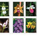 Wild Orchid stamps - US Postal Service [Explored 2020-02-09]