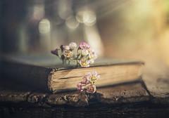 Wax flowers (Ro Cafe) Tags: flowers pentacon50mmf18 sonya7iii stilllife bottles oldbook selectivefocus vintagelens waxflowers textured wood rustic bokeh