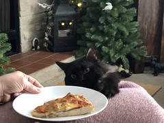 No Pizza for You 😂 National Pizza Day 1 of 2 (Cabinet of Old Secret Loves) Tags: national pizza day nationalpizzaday italiancat italianfood italian bat funny cute hilarious instagramcats catsoftwitter caturday verocats flickrcats flickr facebookcats yummy foodforthesoul foodforthecat sundayvibes sundaythoughts