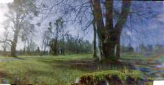 Pinhole Lens flare ? (neilalderney123) Tags: pinhole lensless nolens 3dprinted photography film 35mm tree hampsire lainston landscape