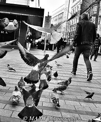 Big budgies. (6m views. Please follow my work.) Tags: blackandwhite bw birds blackwhite amateur biancoenero amateurphotographer city england blancoynegro blanco candid brilliant citycentre enblancoynegro brilliantphoto candidstreetphotography ennoiretblanc blancoenero greatbritain google interesting flickr leeds gb excellent flickrcom greatphoto googleimages greatphotographers inbiancoenero excellentphoto monochrome nikon noir noiretblanc negro onthestreet northernengland ls1 mamf leedscitycentre nikond7200 kirkgateleeds mamfphotography road sex photography photo photographer pigeon quality pigeons photograph pretoebranco schwarz schwarzundweis qualityphotograph street uk town zwartwit unitedkingdom yorkshire upnorth zwart westyorkshire streetcandid zwartenwit