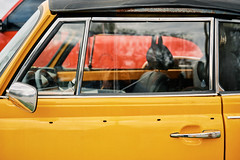 Look, No Hands... Or Body (Dysfunctional Photographer) Tags: volkswagon bug car automobile empty road benton arkansas 2020 usa nikon z7 nef raw captureone