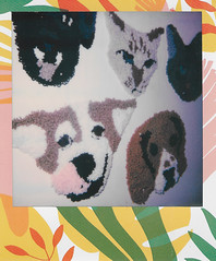 Animal Tapestries (H o l l y.) Tags: polaroid analog portrait instant film 600 flash photography color girl hotdog party candid retro indie vintage bright light funny humor nun rug fiber art dog cute animal puppy pup cat kitty kitten