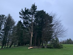 After The Storm - Storm Ciara - County Clare, Ireland - Feb 9, 2020. (firehouse.ie) Tags: 2020 february countyclare ireland stormciara aftermath trees tree felled damage storms storm
