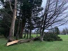 After The Storm - Storm Ciara - County Clare, Ireland - Feb 9, 2020. (firehouse.ie) Tags: trees tree aftermath damage stormciara february ireland storm nature weather eire storms stormdamage roi 2020 natire february2020