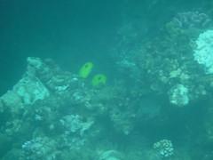 Colourful Fish (Rckr88) Tags: pointeauxbiches mauritius pointe aux biches sea water ocean coastline coast coastal reef reefs coral coralreef underwater fish snorkel snorkelling marinelife marine nature naturalworld colourful colourfulfish