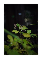This work is 3/21 works taken on 2020/1/3 (shin ikegami) Tags: sony ilce7m2 a7ii sonycamera 50mm lomography lomoartlens newjupiter3 tokyo 単焦点 iso800 ndfilter light shadow 自然 nature naturephotography 玉ボケ bokeh depthoffield art artphotography japan earth asia portrait portraitphotography