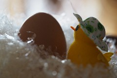 He there ... (fotomie2009) Tags: uovo pulcino still life composition egg hat cappello chick yellow