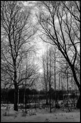 Texture / Текстура (dmilokt) Tags: природа nature пейзаж landscape лес forest закат рассвет восход sunset sunrise dmilokt