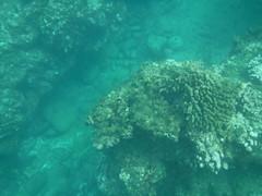 Underwater (Rckr88) Tags: pointeauxbiches mauritius pointe aux biches sea water ocean coastline coast coastal reef reefs coral coralreef underwater fish snorkel snorkelling marinelife marine nature naturalworld