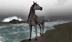 ✶ Bloody Shoulder ✶ (~WildHorse~ Owner) Tags: secondlife horse bento avatar teegle arabian bloodyhshoulder landscape beach theceltiquestallion blogger