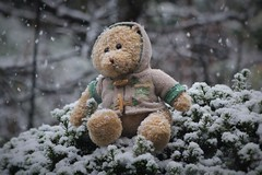 The New Coat. (The.Backyard.Photographer.) Tags: teddy bear coat duffle cold winter snow flakes