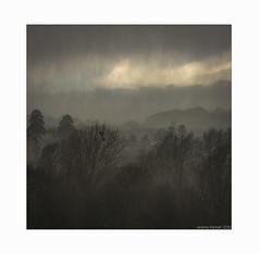 Rainy Monday, Storm Ciara in Henbury (zolaczakl) Tags: henbury rain henburyopenspace 2020 nikond800 nikonafsnikkor24120mmf4gedvrlens photographybyjeremyfennell jeremyfennellphotography february trees bristolchannel wind stormciara