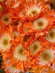 Eye catching Orange Chrysanthemums (wjaachau) Tags: homedecoration inspiration abstract summergarden eyecatchingorange summer sunny sunshine garden landscape nature bouquet floral flowers chrysanthemums ngc npc