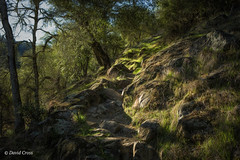 The Path to Point Defiance (buffdawgus) Tags: woodland oaktree primelens pointdefiancetrail landscape winter 35mm oakwoodland canon5dmarkiii lightroom6 canonef35mmf2isusm topazstudio rockyhillside southyubariverstatepark nevadacounty california