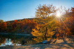 Autumn (zaxarou77) Tags: autumn nature landscape color sky gold orange nopeople water lake crimea russia sun flare sony ilce a7 a7m2 a7mii markii carl zeiss 1635 cz f4 sel fe fe1635f4z ilce7m2 variotessar t mm za oss sel1635z