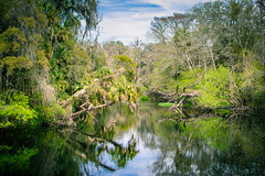 (cwsmith5b) Tags: landmark historic hiking wilderness statepark outside landscape greenery tropical water river florida