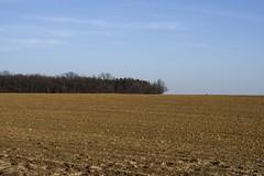 IMGP7747 (hlavaty85) Tags: pole field