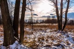 Winter Sun (Neil Cornwall) Tags: 2020 canada february ontario windsor ojibwayprairienaturereserve snow sunset winter