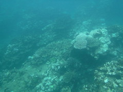 Coral Reefs (Rckr88) Tags: pointeauxbiches mauritius pointe aux biches underwater snorkel snorkelling coral coralreef reefs corals fish under marine marinelife sea water ocean coast coastline coastal nature naturalworld