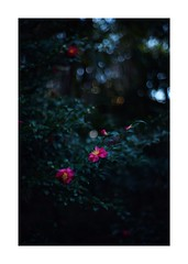 This work is 6/21 works taken on 2020/1/3 (shin ikegami) Tags: sony ilce7m2 a7ii sonycamera 50mm lomography lomoartlens newjupiter3 tokyo 単焦点 iso800 ndfilter light shadow 自然 nature naturephotography 玉ボケ bokeh depthoffield art artphotography japan earth asia portrait portraitphotography