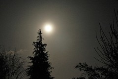 Tail end of February's Snow Moon / Supermoon. (Epiphany Appleseed) Tags: snowmoon snowmoonengland supermoon astro astronomy astrophotography astrophysics waninggibbous waninggibbousmoonlondon waning moon gibbous gibbousmoonlondon london uk england february 2020