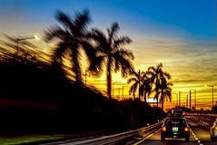 Palms At 55 (Wes Iversen) Tags: florida htmt interstatehighways miami nikkor18300mm treemendoustuesday cars clouds highways palmtrees roads silhouettes sky streetlamps sunsets taillights trees vehicles