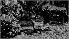 P080132.jpg (DrOpMaN®) Tags: night olympus m43turkiye korhankumral m43 lumixgvario1442mmf3556oisii panasonic ep5 outdoor lumix winter pen darktable snow blackwhite bw