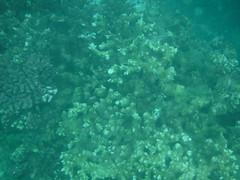 Underwater Worlds (Rckr88) Tags: pointeauxbiches mauritius pointe aux biches underwater snorkel snorkelling coral coralreef reefs corals fish under marine marinelife sea water ocean coast coastline coastal nature naturalworld worlds underwaterworlds underwaterworld world