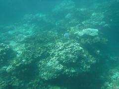 Under the Sea (Rckr88) Tags: pointeauxbiches mauritius pointe aux biches underwater snorkel snorkelling coral coralreef reefs corals fish under marine marinelife sea water ocean coast coastline coastal nature naturalworld underthesea