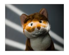 Stiefelchen ! (xockisfriends) Tags: stiefelchen cat orange friend eneamaemü wolfiwolf light portrait animalportrait hm gut hastdudawasgutes streuner luchsi streifen diagonal