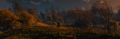 ''Year Award'' (HodgeDogs) Tags: leaves redengine witch people grass tree trees openworld autumn larahjohnson inexplore explore photography nvidia pc games gaming cdprojektred cdpr witcher