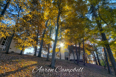 Foliage Sunflare, 2019.11.18 (Aaron Glenn Campbell) Tags: knoxville knoxcounty autumn fall leaves foliage colorful 3xp ±3ev hdr macphun skylum aurorahdr sony a6000 ilce6000 mirrorless tennessee nikcollection colorefexpro viveza wideangle primelens emount rokinon 12mmf2ncscs sunflare backlit backlighting shadows sunlight trees apartments buildings