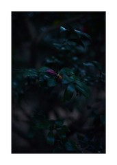 This work is 7/21 works taken on 2020/1/3 (shin ikegami) Tags: sony ilce7m2 a7ii sonycamera 50mm lomography lomoartlens newjupiter3 tokyo 単焦点 iso800 ndfilter light shadow 自然 nature naturephotography 玉ボケ bokeh depthoffield art artphotography japan earth asia portrait portraitphotography