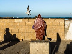 Beyond the wall. In #essaouira #morocco #seagull ... (lorenzogrif) Tags: essaouira morocco seagull streetphotography lightandshadow myfeatureshoot spicollective igstreetphotography theprintswap lensculture magnumphotos urbanphotography aspfeatures ipctakeover hcscstreet shadowhunters eyeshotmag fujifilmuk yourshotphotographer irdailyshots tspf spistreetphotographyitaly streetphotographyintheworld streetphotographermagazine curatethis1x