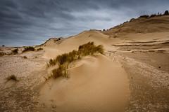 The dunes @ Voornes Duin