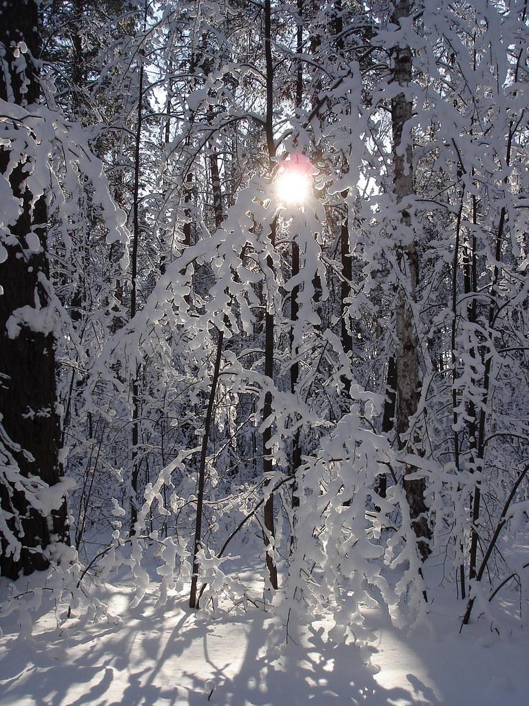 фото: Зимний лес