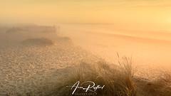 Golden Sea Fog (Aron Radford Photography) Tags: yellow walberswick southwold suffolk coast beach sunrise dawn sea fog mist dune grass jetty landscape east anglia golden