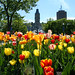 Tulips and the Parliament Buildings, Quebec
