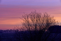 sunrise (Jos Mecklenfeld) Tags: nederland niederlande natur nature natuur sonya6000 westerwolde winter sunrise sonnenaufgang zonsopkomst selp1650 landscape landschaft landschap terapel groningen netherlands