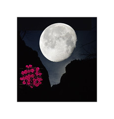 February  Moon  ~ Snow Moon (Karen McQuilkin) Tags: snowmoon februarymoon love roses zion zionnationalpark luna