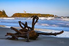 Driftwood and Lighthouse (TierraCosmos) Tags: driftwood lighthouse beach ocean surf waves sculpture capearagolighthouse oregon coast charleston oregoncoast seascape landscape sunrise goldenhour bestshotoftheday