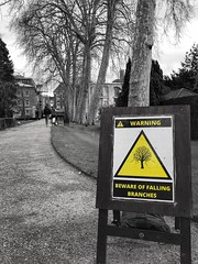 Cambridge (Sir Cam @camdiary) Tags: street trees cambridge storm weather sign pembrokecollege camdiary stormciara february iphone 202002 selective colouration blackandwhite bw